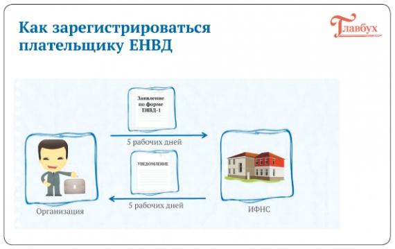 Право: Как работать на ЕНВД и упрощенке в 2013 году